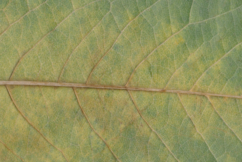CreativeCommons - Autumn leaves - 2015 Series 1 - 04 by #TexturePalace