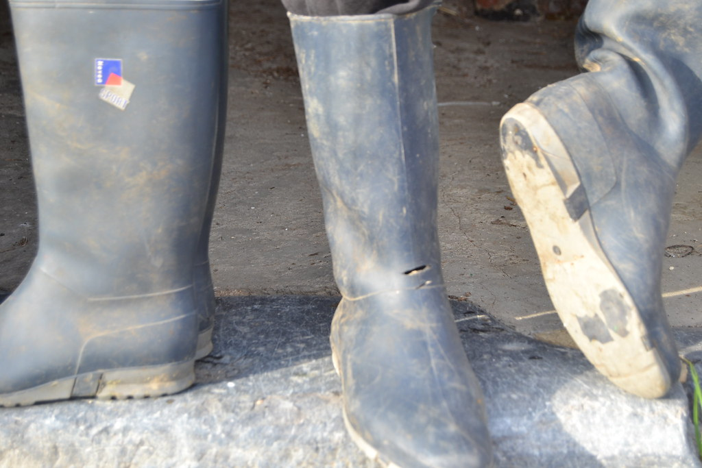 dunlop stiefel amazing dunlop hevea ripped wellies bottes. Black Bedroom Furniture Sets. Home Design Ideas