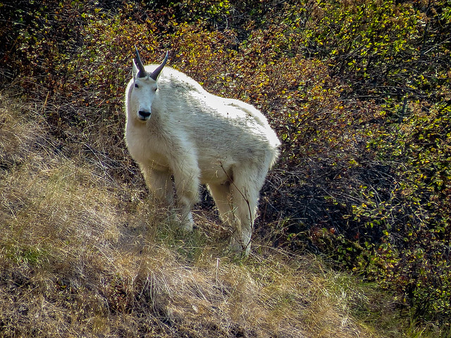 Wallowa National Forest 013.jpg