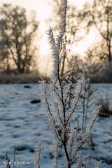 winterlich (5 von 7)