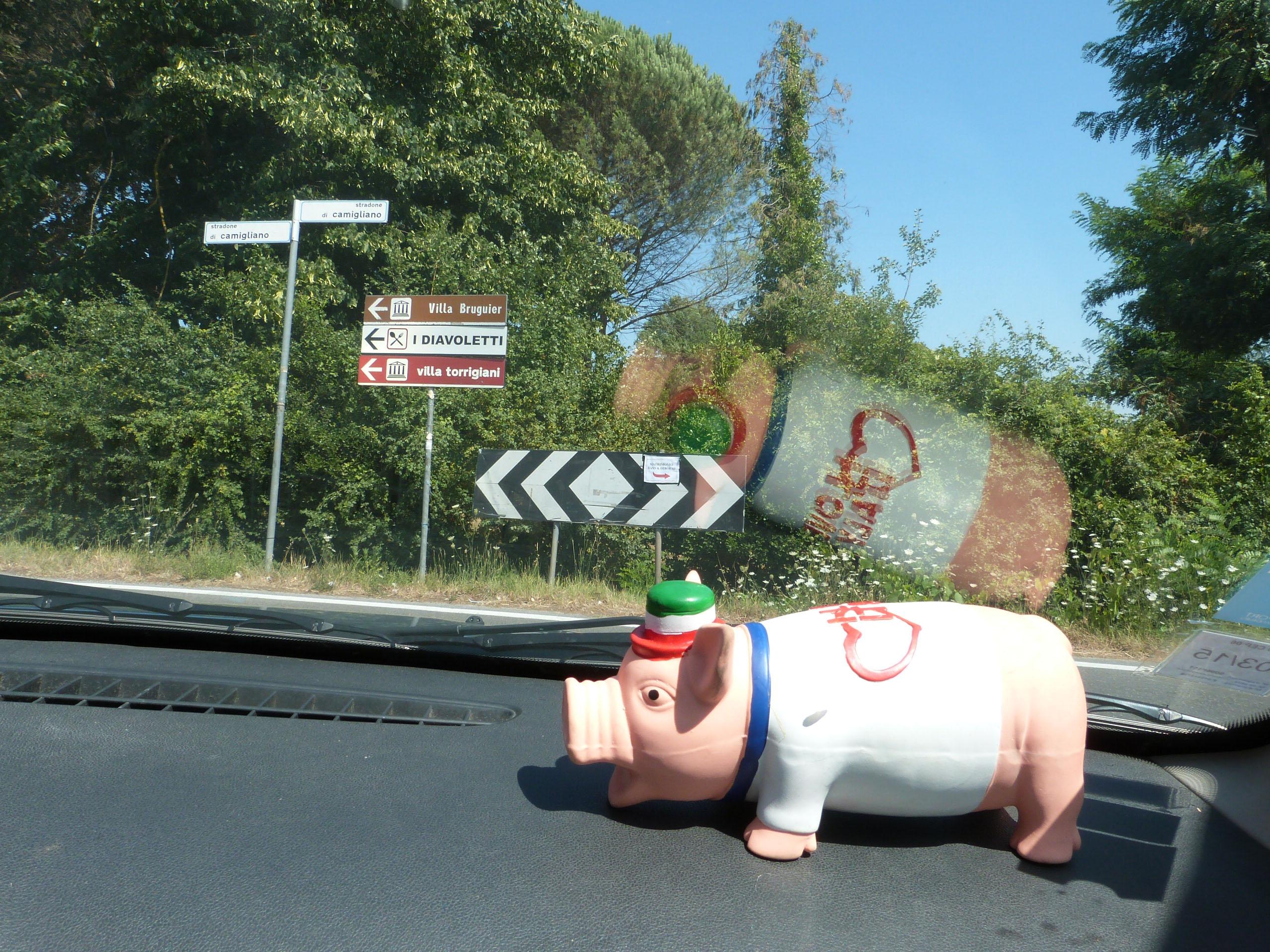 cochon voyageur