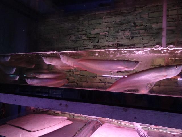 aquarium stores in Danang, Vietnam 20824818322_f758d51b09_z