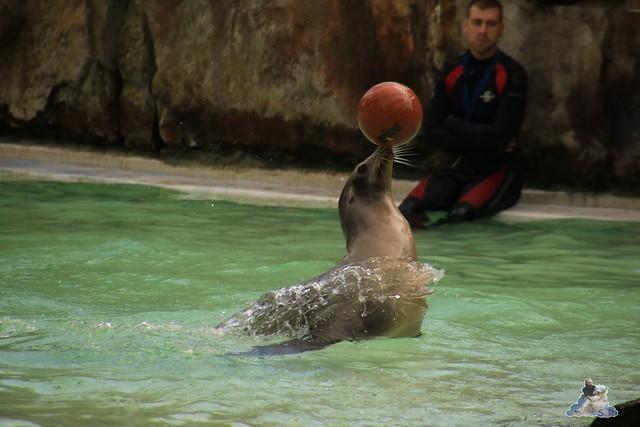Zoo Berlin 18.09.2015   038