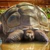 Darwin the Tortoise by flowerpotman!