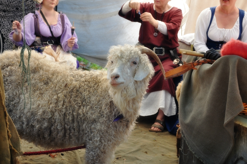 Angora Goat @ Mt. Hope Chronicles