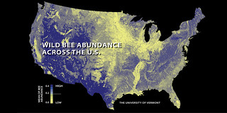 Wild bee abundance across the U.S.