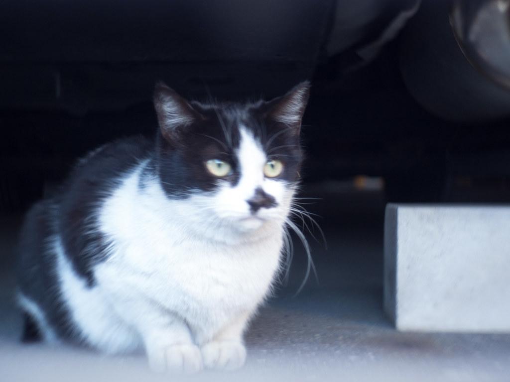Stray cat f/1.4