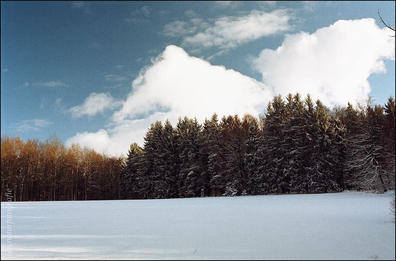 Winterspaziergang am Katzenbuckel (1)