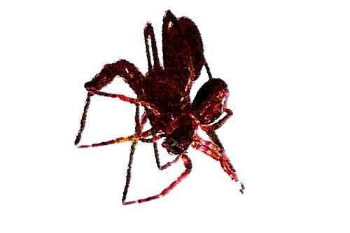 Spider-art