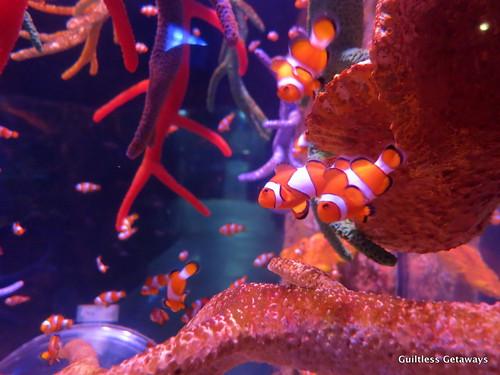 nemo-fish.jpg