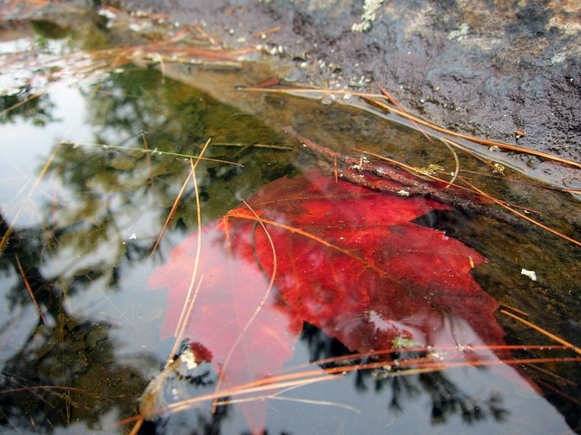 Drowned Leaf
