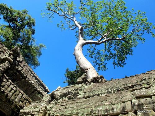 Spung Tree I
