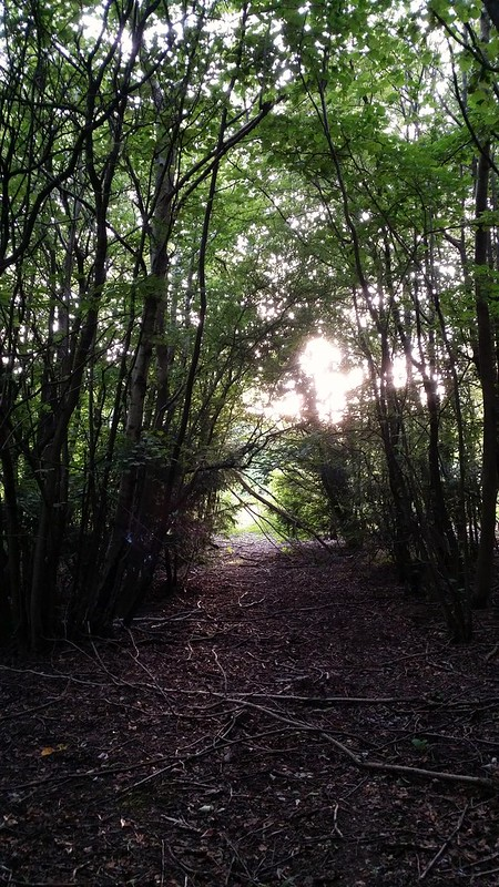 Late afternoon in the woods #sh
