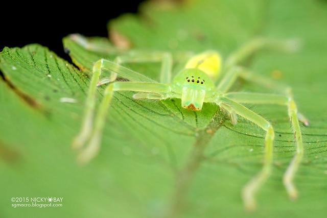 Huntsman spider (Sparassidae) - DSC_3942