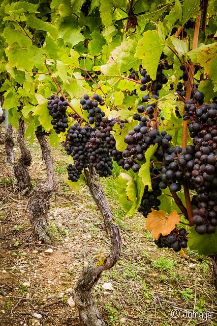 Bruley - Lucey : dans les vignes du Toulois