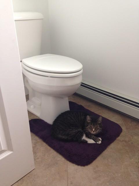 I can't pee when Santana sleeps here