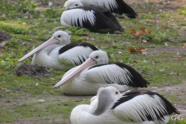 Sonntags-Besuch im Tierpark Friedrichsfelde 04.10.201574