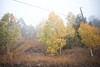 Colorado October - 4 by ┌o┐