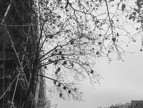 ÁrvoreLivro