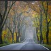 Fahrt in den Herbst by NPPhotographie