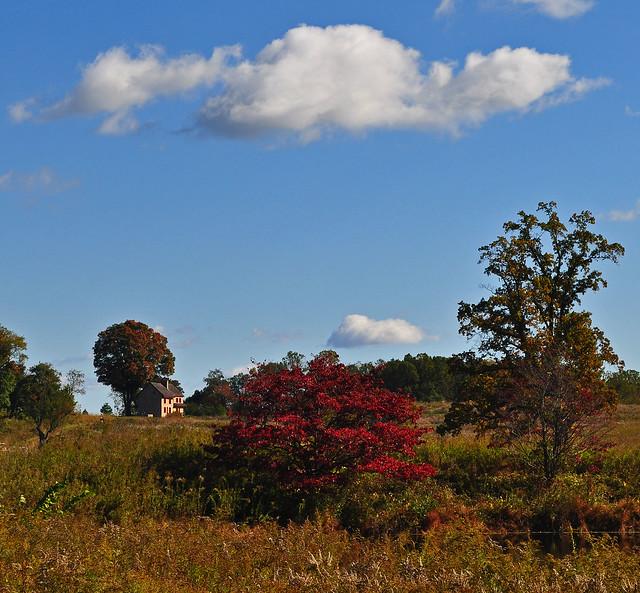 Meadow Garden- with Cornus florida in background (1)