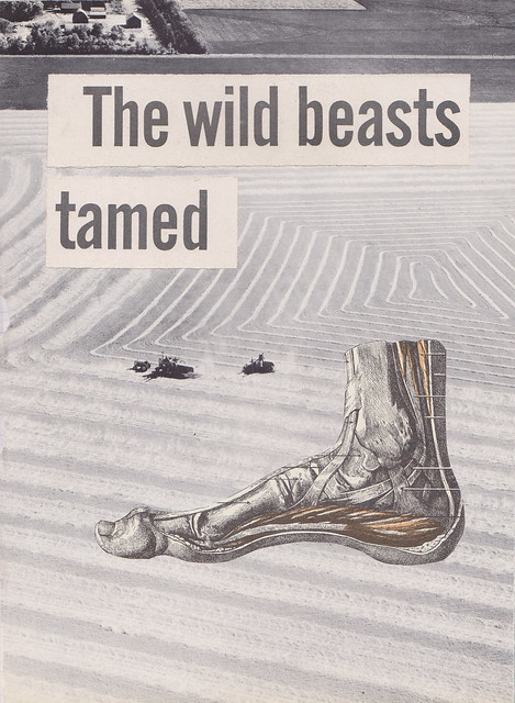 The Wild Beasts Tamed