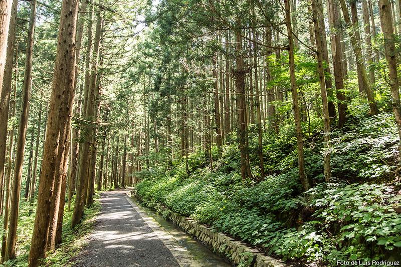 Excursión a Jigokudani-63
