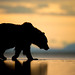 Coastal Brown Bear Silhouette by Kevin Morgans