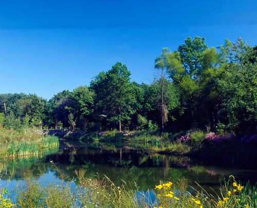 New Creek Bluebelt