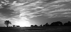 Oak point sunset black and white