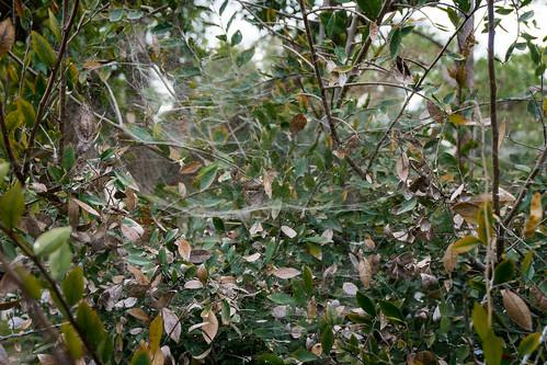 Mesh Spider Web