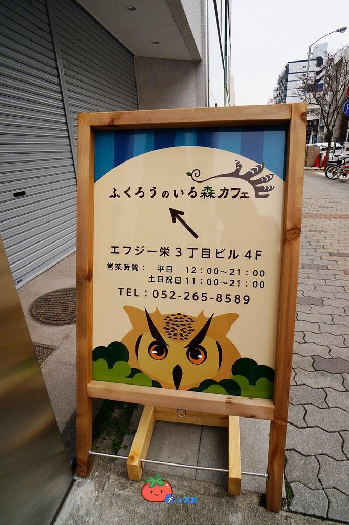 名古屋貓頭鷹咖啡