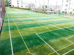 sport venue, grass, plant, artificial turf, net,