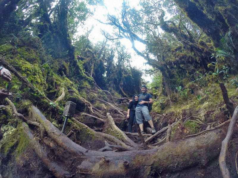 mount irau mossy forest (11)