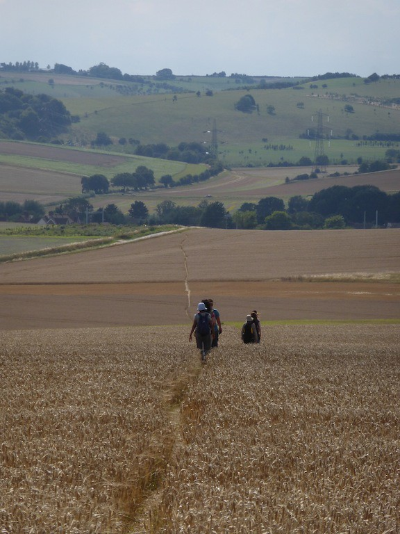 Crossing the Cornfield SWC walk 242 Cholsey to Goring via Wallingford