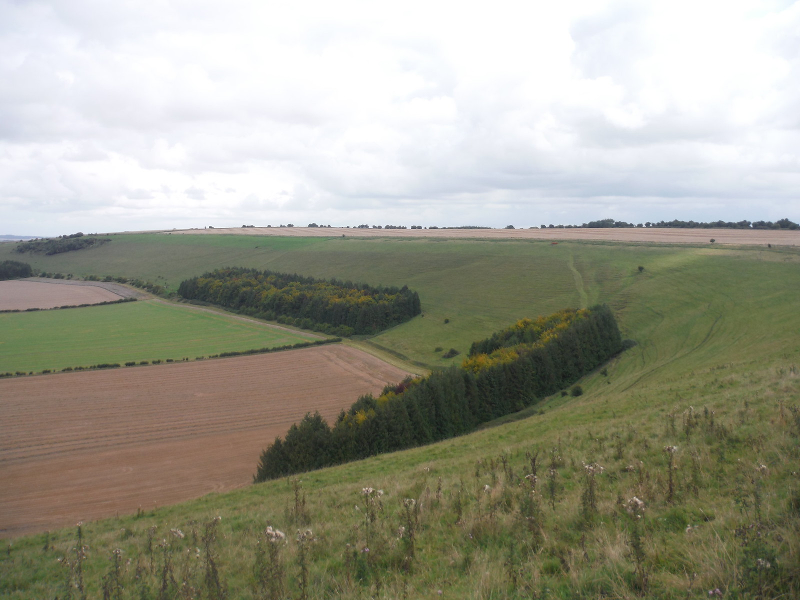 Along Swallowcliffe Down (easterly view) SWC Walk 250 Tisbury Circular via Alvediston