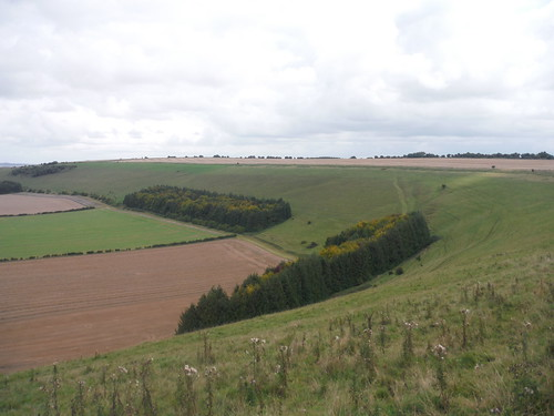 Along Swallowcliffe Down (easterly view)