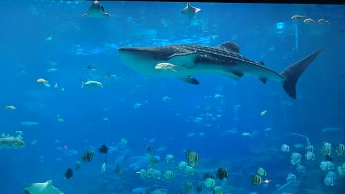 Image Result For Atlanta Aquarium Admission