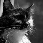 Summer Kitty