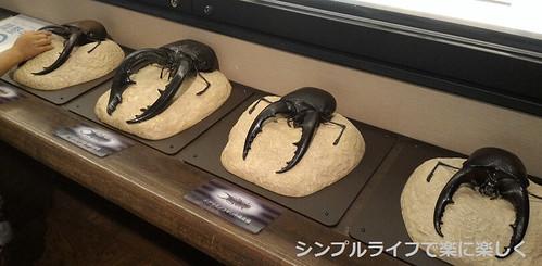 東京3日目、博物館・クワガタ