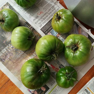 Uh oh. Our green tomatoes are looking a touch blight-y. 😩