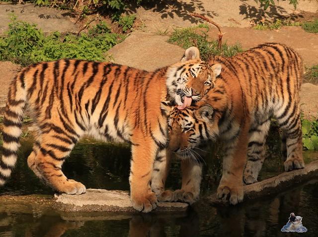 Tierpark Berlin 20.09.2015  0214
