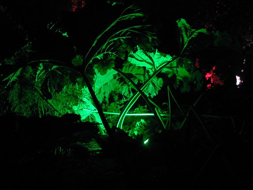 Botanic Lights (36)