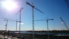 Cranes at the Wharf, 23 Nov 2015: the full complement of 7 towers