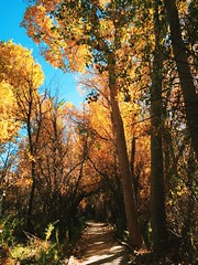 Big Morongo Canyon Preserve: Autumn