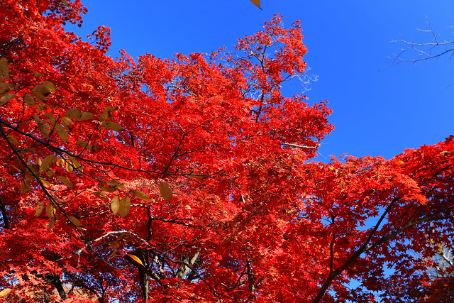 盛岡的楓葉,日本,Japan