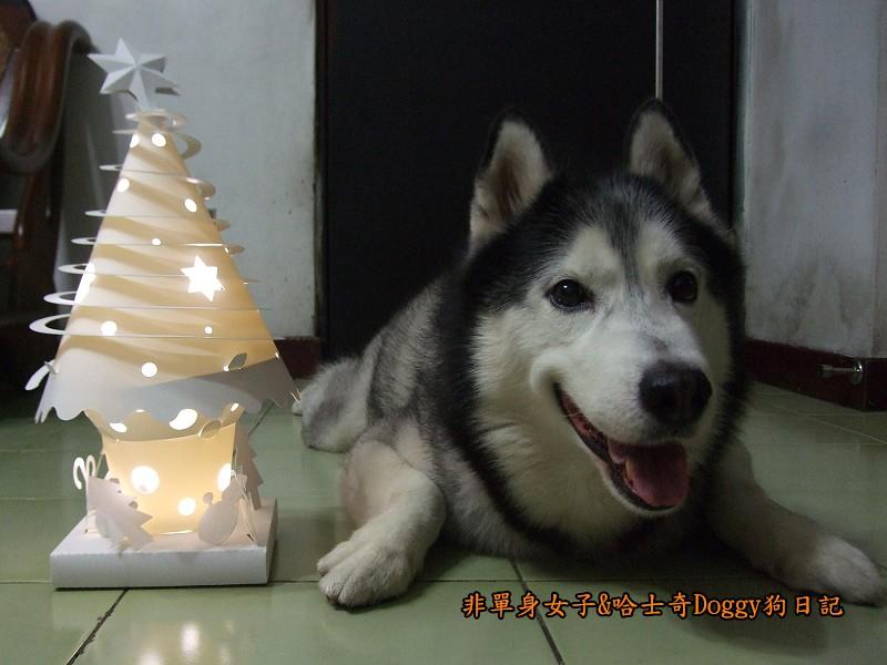 Doggy與紙箱王聖誕樹造型燈飾組09