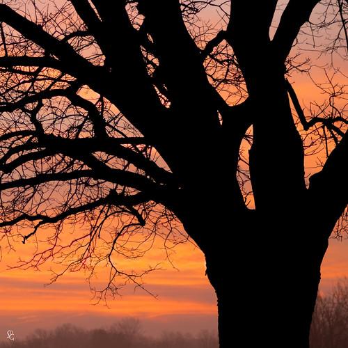 shadow sky color tree sunrise square dawn iowa dubuque