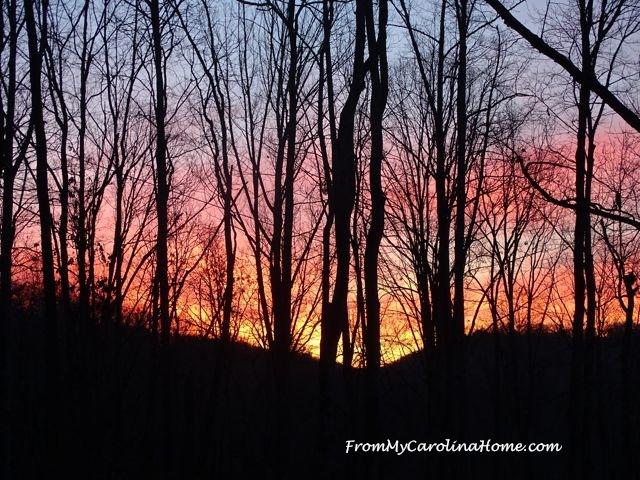 December Dawn 1