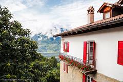 Greiftiervogelshow - Dorf Tirol